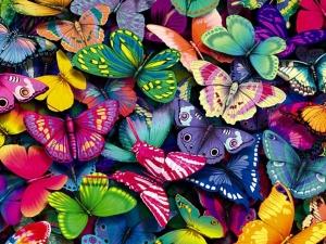 Butterflies-yorkshire_rose-15990936-1280-960